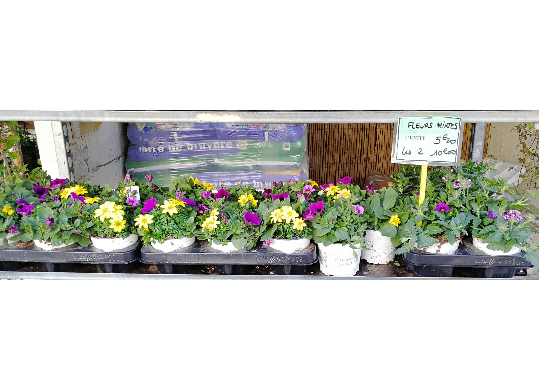 fleursMixtes